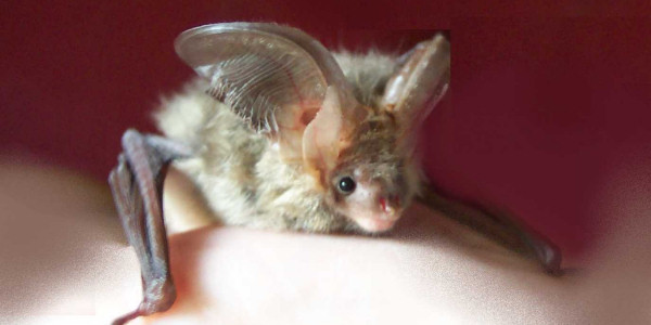 Go Batty for Bats, Family Workshop in Hyde Park