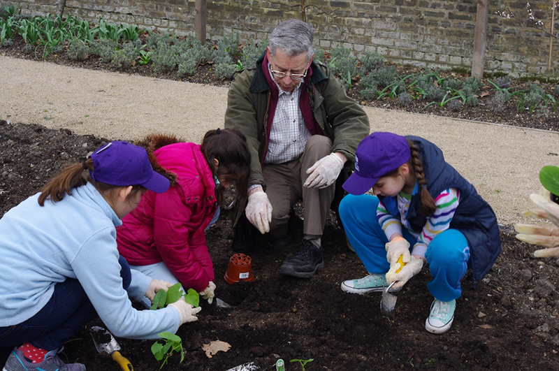 Students plant broad beans in The Queen's Orchard