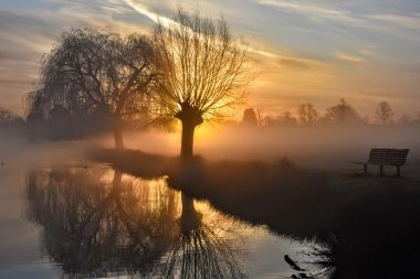 Bushy Park in the morning, by Jarek Kurek