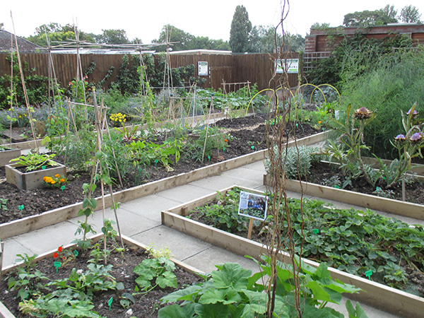 Gardens beds at the Regent's Park Allotment