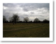 Bushy Park - The track way shows the ridges and furrows which remain from the medieval field system.