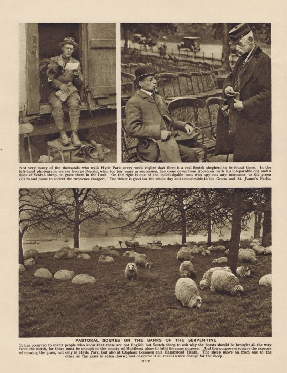 Shepherd and flock by The Serpentine, 1926 © The Hearsum Collection