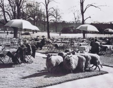 Sheep and tea in Kensington Gardens, 1948. © The Hearsum Collection