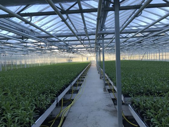 Flowers being grown in Hyde Park super nursery
