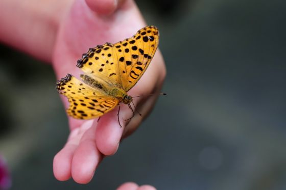 Butterfly in a child's hand
