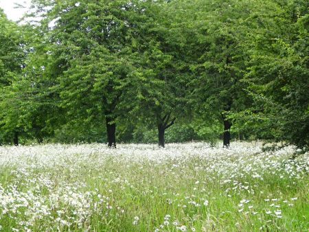 Leave No Trace: The Importance of Wildflower Meadows