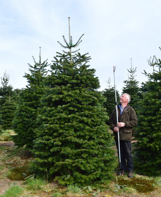 Buy a sustainably-sourced Christmas tree