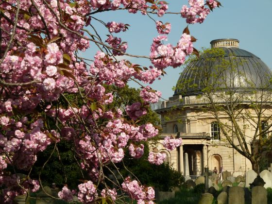 Spring in Brompton Cemetery