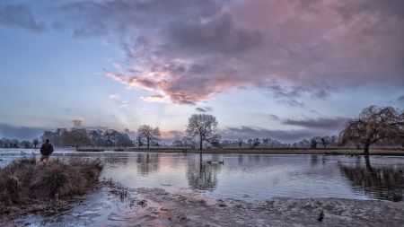 Bushy Park Diary - January 2020