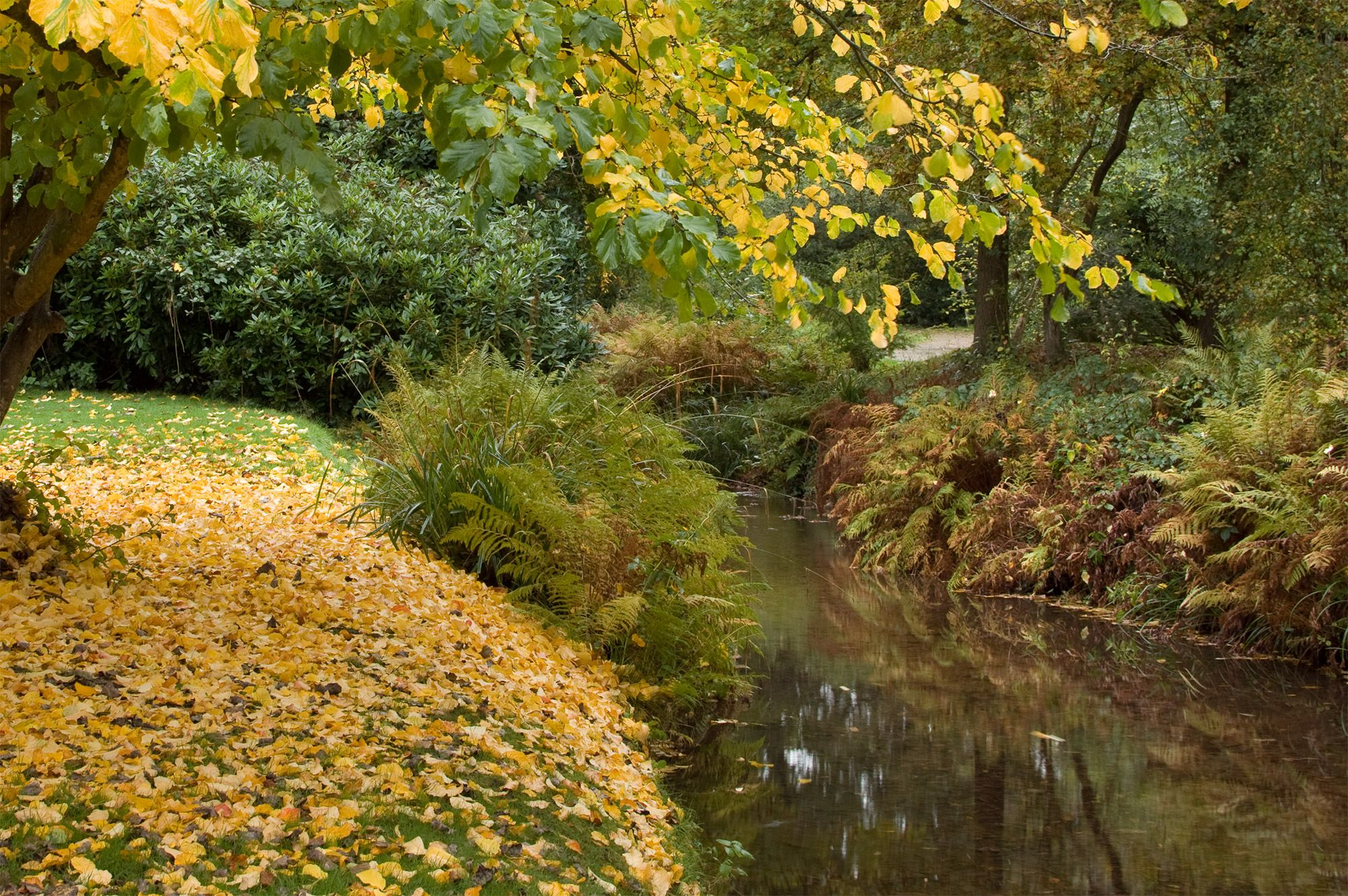 Autumn colour in the Woodland Gardens
