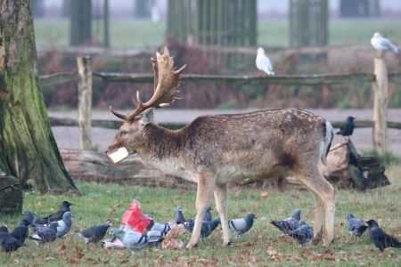 Feeding deer is the opposite of kind, says The Royal Parks
