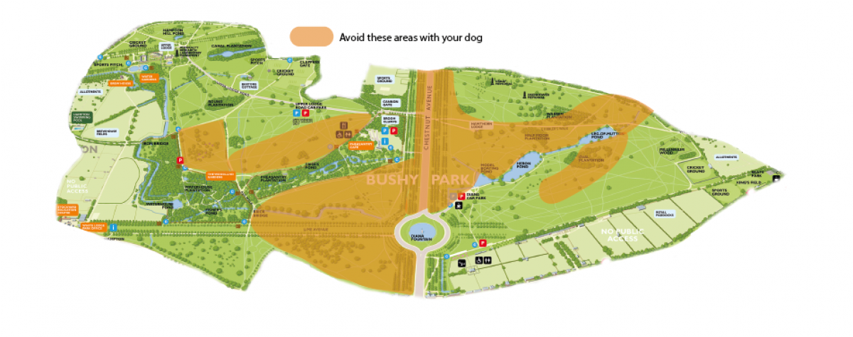 Map showing deer birthing areas in Bushy Park. Dogs must avoid these areas.