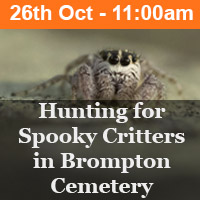 Hunting for Spooky Critters in Brompton Cemetery
