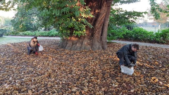 Apprentices collecting chestnuts in Greenwich Park