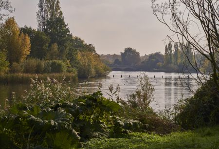 Lake and Pond Management for Wildlife