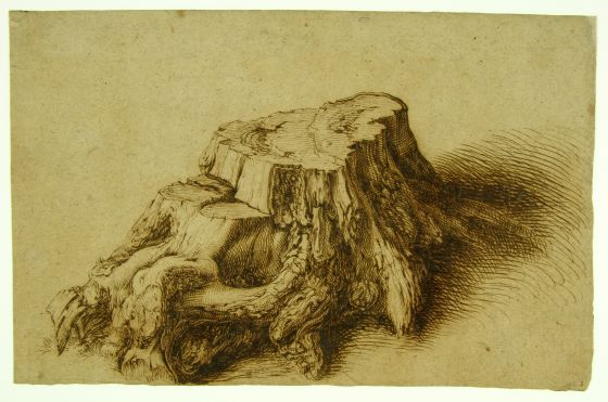 'The heavy trunk of an oak, sawn off horizontally above its roots' by Jacob de Gheyn (1600)