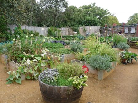 Kensington Gardens Allotment update