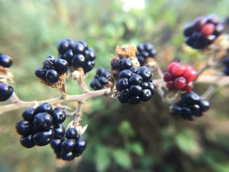 Brambles, Bumblebees, and a Haiku of Hate
