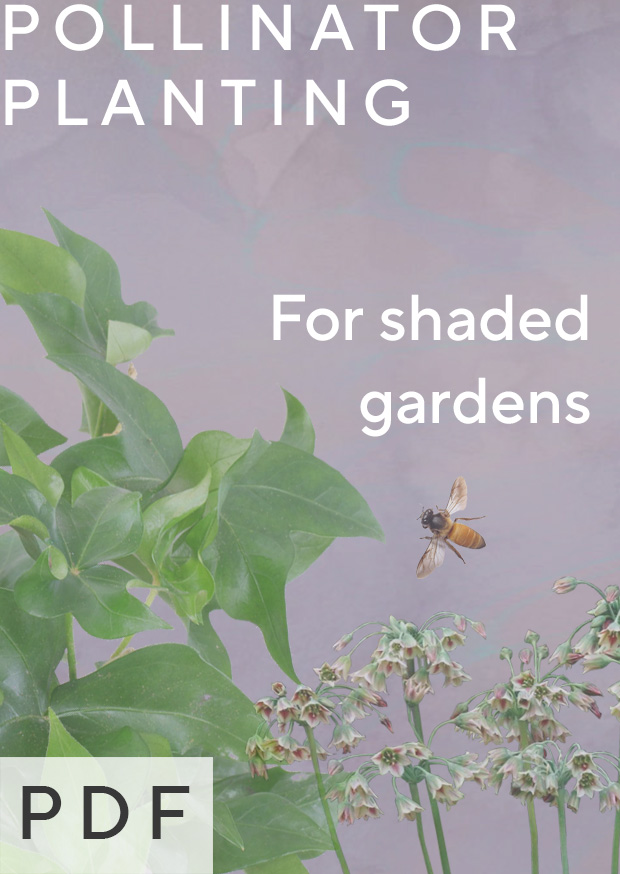 Pollinator Plants for Shaded Gardens