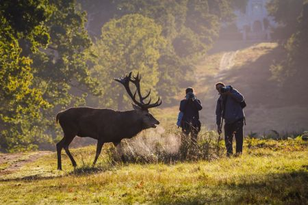 Give rutting deer respect and space, urges The Royal Parks