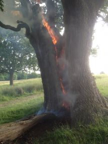 Barbecues - the root of fires in the Royal Parks