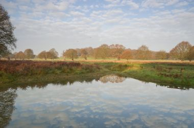 Attenborough Pond