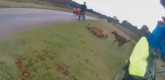 Dog attacking deer in Richmond Park. Stills from the video.