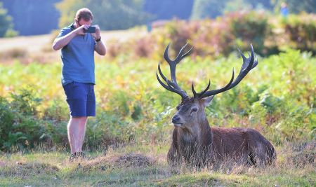 Don't take risks with rutting deer, The Royal Parks warns visitors