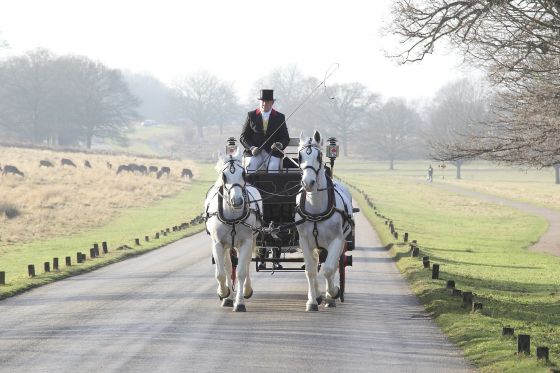 Winter horse-drawn carriage rides