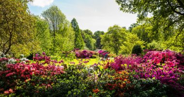 Bright colours in Isabella Plantation