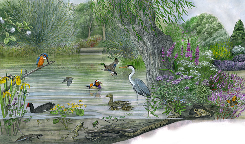 Illustration of the ponds in the Isabella Plantation