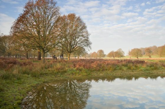 Richmond Park landscape
