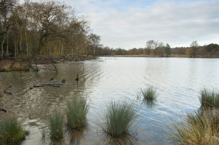 Richmond Park Diary - April 2018