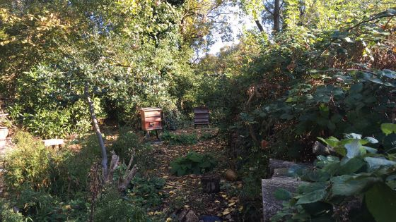 Apiary in St James's Park