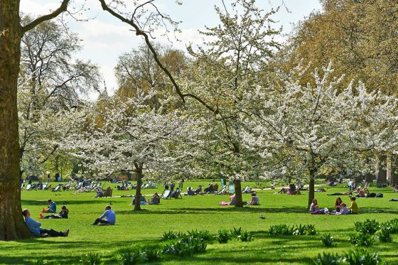 Spring trees in St James's Park