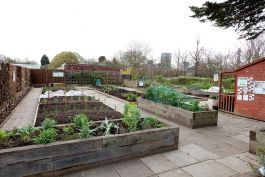 The Allotment in Regent's Park