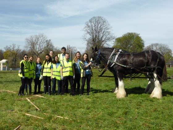 Bloomberg volunteers working with Shire Horses at Kensington Gardens