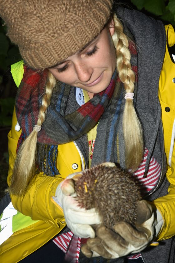 hedgehog survey