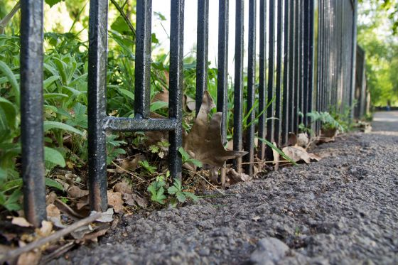 Hedgehog access holes in railings in Regent's Park