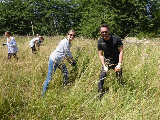 Burberry volunteer day- thistle pulling