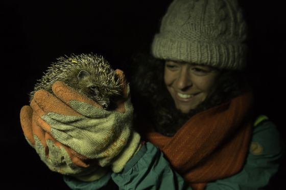 Hedgehog volunteer with a hedgehog