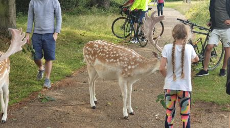 Wild deer are not Disney creatures, The Royal Parks warns parents