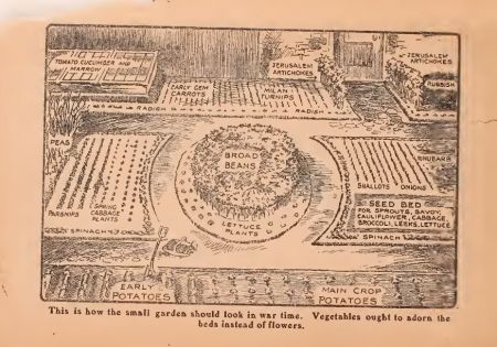 To Grow Or Not To Grow: Choosing vegetables for our WW1 allotment