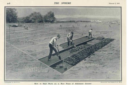 Cabbages or cricket? The fight for Greenwich Park's wartime allotment