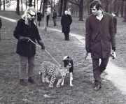 Secretary Angela McWilliams takes Michael, her pet leopard, to Kensington Gardens for his daily walk. He came from the Tyseley Pet Stores in Birmingham, at a price of £200. The cat lived with Angela in her Kensington flat. Perhaps the strangest pet to be exercised in Kensington Gardens! Credit: Keystone Press Agency ltd