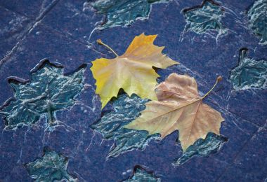 Fallen oak leaves on the surface of the Canadian war memorial in Green Park, by Blue Popovic