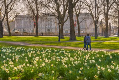 View of Buckingham Palace from Green Park, by Pawel Libera