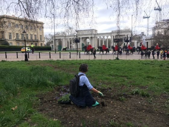 Bulb planting and cavalry