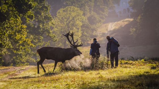 Photographers too close to deer