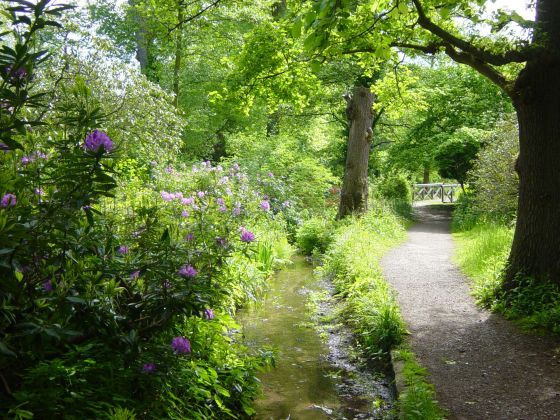 Stream through the Waterhouse Woodland Garden